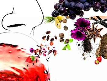 aroma-vino