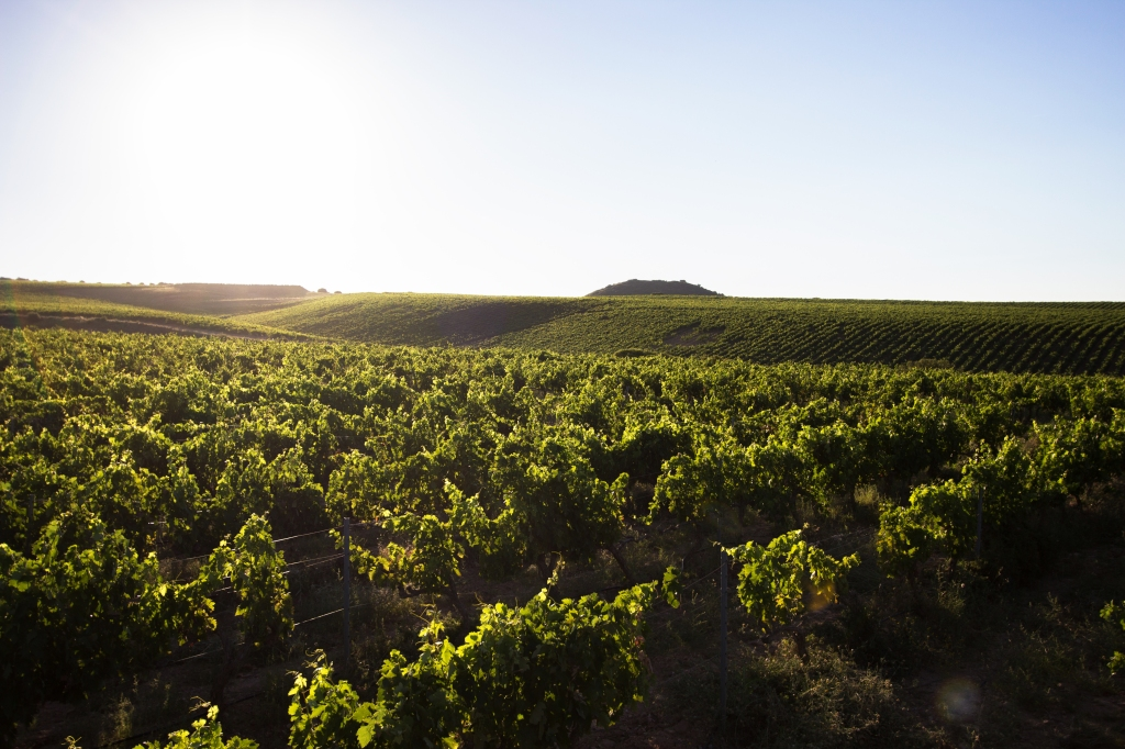 Viñedos en Monte Yerga (Rioja)