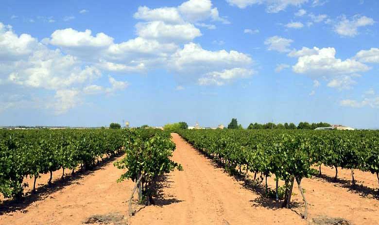 Viñedos ©Aleph Wines